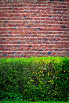Free Green Bushes At An Brown Wall Royalty Free Stock Photo - 25762965