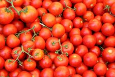 Free Red Tomatoes Stock Photo - 25763020