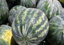 Free Striped Watermelons Stock Photos - 25763033