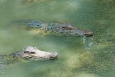 Free Crocodile Stock Photos - 25764143