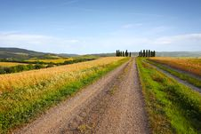 Free Typical Tuscany Landscape Royalty Free Stock Photography - 25765377