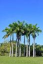 Free Beautiful Park Garden Stock Photography - 25775232
