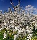 Free Orchard Stock Photo - 25779270