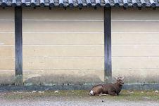 Free Nara Deer Royalty Free Stock Photography - 25771817