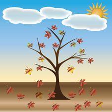 Free Beautiful Autumn Tree. Stock Image - 25775191