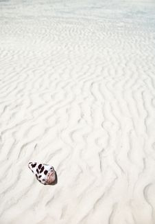Free Shell On A White Sand Beach Stock Photo - 25776840