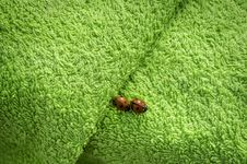 Free Two Ladybugs On Green Towel Royalty Free Stock Image - 25777016