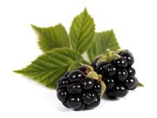 Free Blackberries Stock Images - 25779174