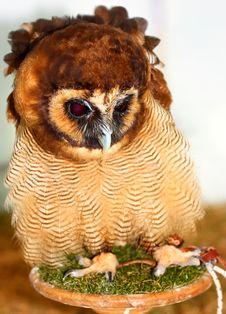 Free Brown Wood Owl &x28;Strix Leptogrammica&x29; Stock Photo - 25784380
