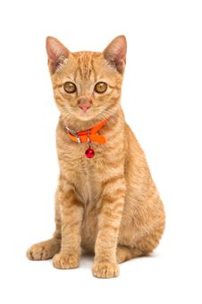 Free Front View Of  Kitten Royalty Free Stock Photos - 25788698