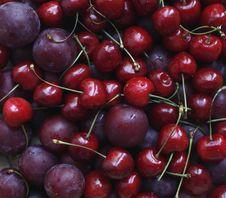 Cherry And Plum Royalty Free Stock Photos