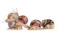 Free Team Of Snails Stock Photos - 25791193