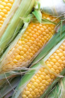 Free Fresh Organic Corn Royalty Free Stock Photo - 25793705