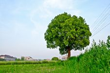 Free Trees; Green; Natural Royalty Free Stock Photo - 25795365