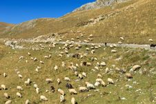 Free Sheep On Hillside Stock Image - 25798351