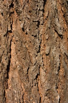 Free Spruce Bark Royalty Free Stock Image - 25798826