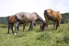 Free Horses Family Royalty Free Stock Photo - 2580815