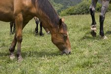Free Horses Family Royalty Free Stock Image - 2580876