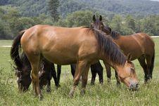 Free Horses Family Stock Photos - 2580883