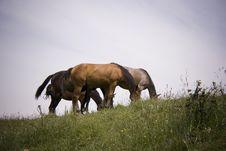 Free Horses Family Royalty Free Stock Image - 2580886