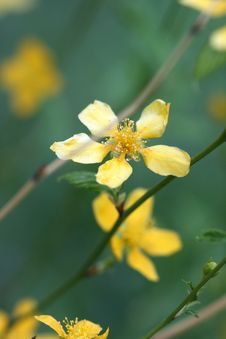 Free Yellow Flower On Green Royalty Free Stock Photography - 2580957