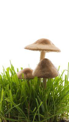 Free Mushroom Stock Photo - 2581050