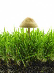 Free Mushroom Stock Images - 2581054