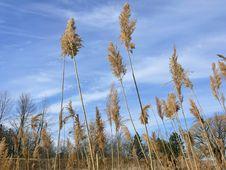 Free High Grass Stock Photo - 2581810