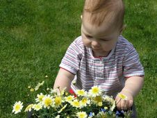Baby Looking At Yellow Flowers Stock Images