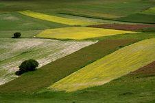 Free Castelluccio /spring Landscape Royalty Free Stock Image - 2582576