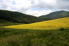 Free Castelluccio /spring Landscape Stock Photo - 2582590