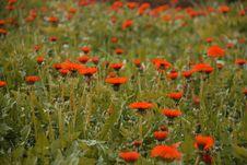 Free Orange Field Royalty Free Stock Photos - 2583178