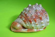 Free Sea Shell Stock Image - 2584371