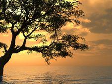 Free Old Tree Stock Photo - 2586540