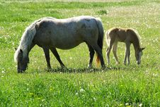 Free Horse And Foal Stock Photos - 2587023