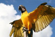 Free Macaws Stock Photos - 2587203
