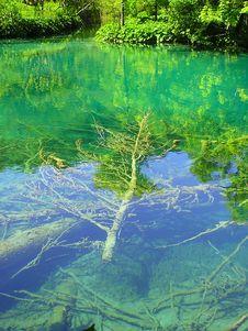 Free Tree Under Water Stock Photo - 2588770