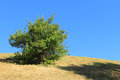 Free Lonely Green Bush On Dried Dead Grass Hill Stock Photos - 25800813