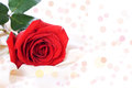 Free Red Rose Stock Photo - 25803110