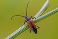 Free Red & Black Beetle Royalty Free Stock Photography - 25804907