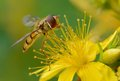 Free Hover Fly Macro Stock Image - 25806561