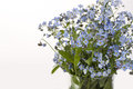 Free Forget-me-not Royalty Free Stock Photography - 25809467