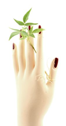 Free Small Plant Held By Woman S Hand. Royalty Free Stock Images - 25800819