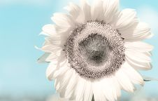 Free Delicate Flower Stock Images - 25803294