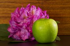 Rhododendron Blossom And Apple Stock Photography