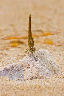 Free Dragonfly Stock Image - 25807801