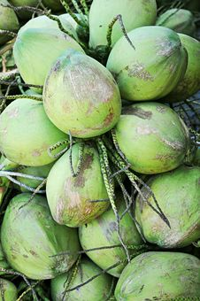 Free Cluster Of Green Coconuts Stock Photos - 25808033