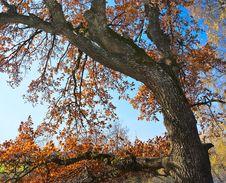 Free Autumn Royalty Free Stock Photo - 25808535