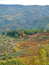Free Autumn Colours In Chianti Countryside Royalty Free Stock Photos - 25811098