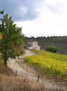 Free Autumn Colours In Chianti Countryside 1 Royalty Free Stock Photography - 25811167